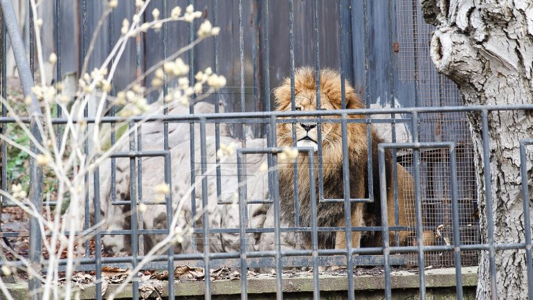 Capital's Zoo might get expanded and renovated