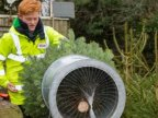 Schoolboy entrepreneur grows 1,500 Christmas trees to fund university fees