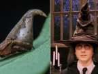 "New species of spider named after ""Harry Potter"" sorting hat"