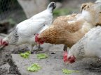 National Agency of Food Safety has banned import of poultry and meat from 13 European countries