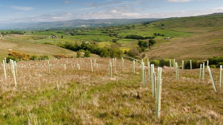 England may be in deforestation state due to lack of tree planting