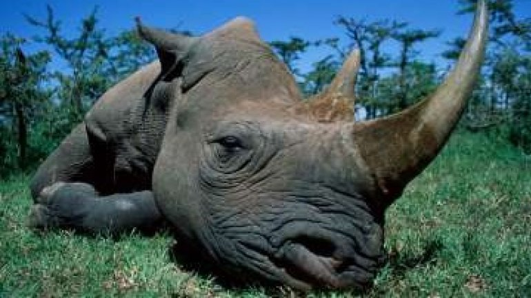 Texan hunter EXPLAINS his killing endangered African black rhino