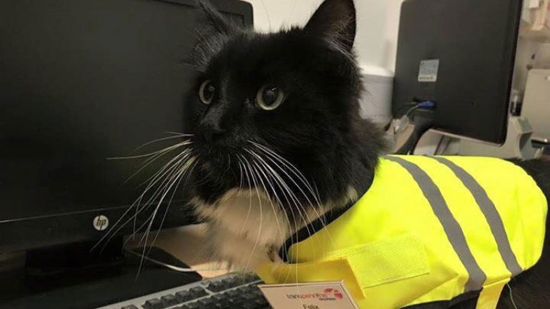 Felix the Huddersfield station cat given promotion in recognition of her mouse-catching skills