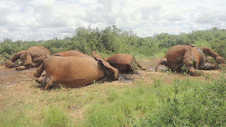 China sets ban on ivory imports