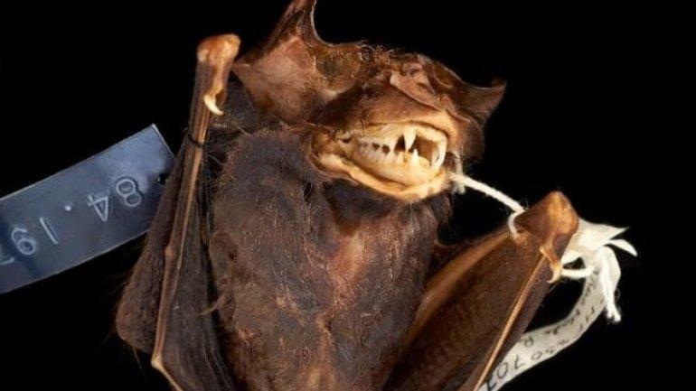 Bats falling from sky warning as Australia bakes in heatwave