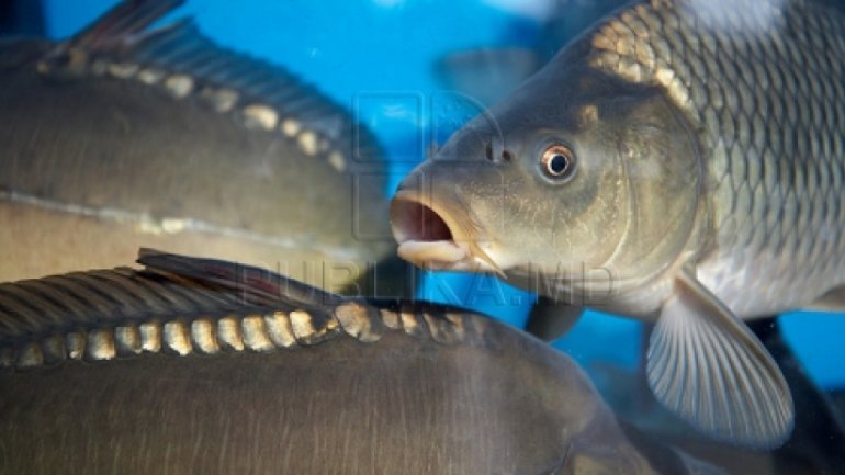 Fish vendors at main bazaar in Chisinau, raided