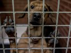 Head of Spanish animal shelter jailed for killing healthy cats and dogs