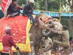 One of world's oldest elephants dies in India