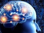 Speaking more languages causes THESE modifications to your brain