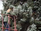 End of winter holidays. Country's main Christmas tree taken down