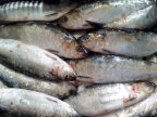 Experts' advice on how to avoid fish poisoning