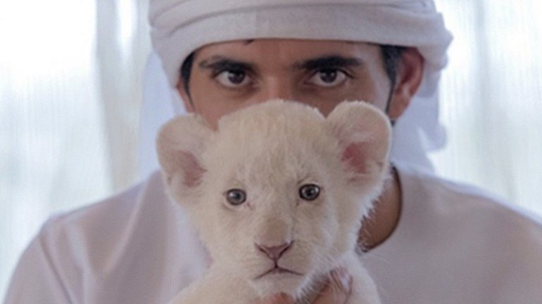 Cheetahs, tigers and lions declared as illegal pets in UAE