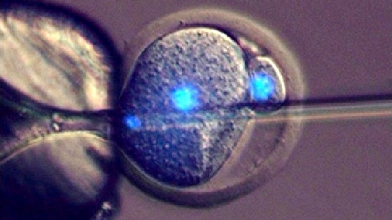 Researchers: New fertility procedure may lead to embryo farming