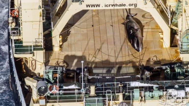 Australia criticizes Japan for whaling off Antarctica