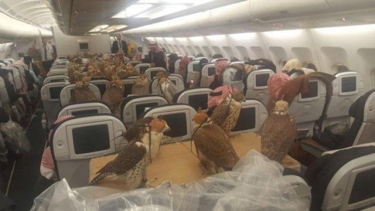 Photo of 80 falcons on board an airliner to Jeddah becomes viral (PHOTO)