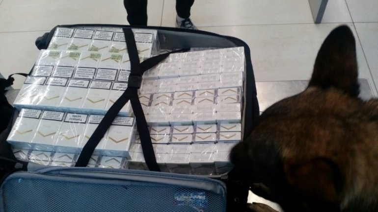 British citizen tries to smuggle 8,000 cigarettes from Moldova