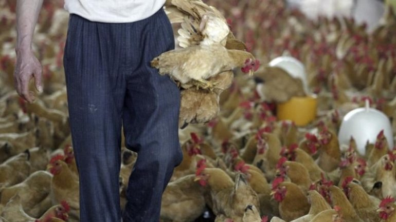 Guangzhou to halt poultry trade for three days during Jan-March