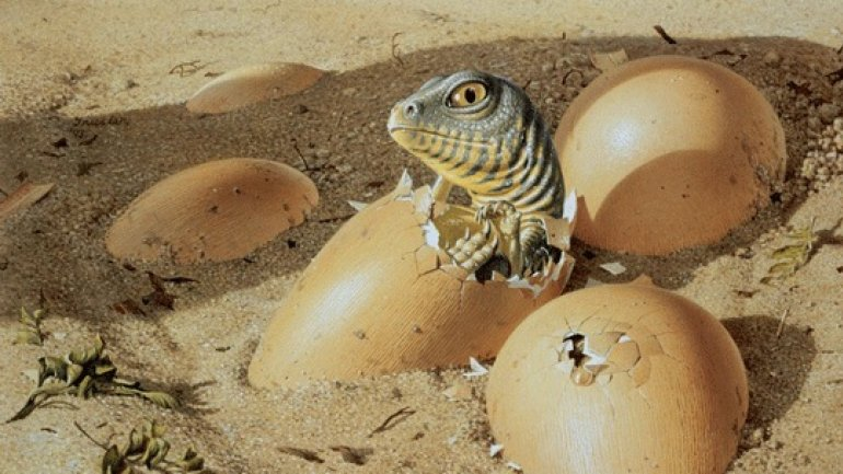 NEW THEORY: Dinosaurs may have gone extinct because it took them too long to hatch