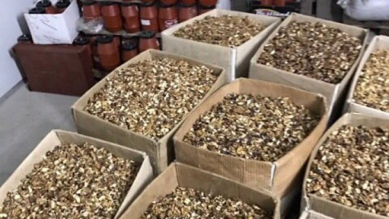 Moldovan law-enforcers catch up nut-kernel smugglers