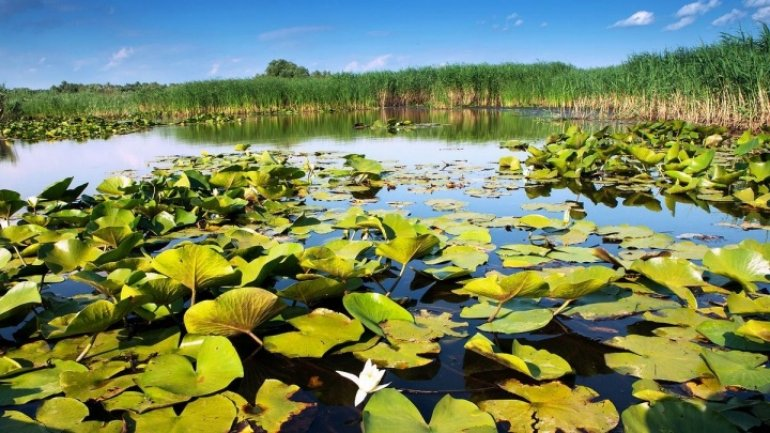 Natural reservation in Moldova, likely to become part of world heritage