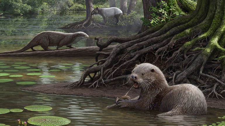 Otters as big as wolves lived once in China