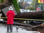 More rain in store after 5 killed in California storms