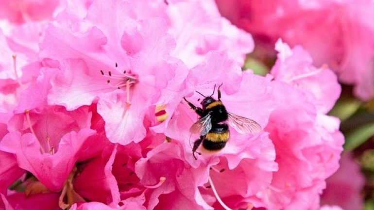 "EU criticised over ""emergency authorisations"" of banned bee-harming pesticides"