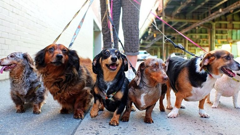 Jobs of future: More dog walkers will be needed than teachers