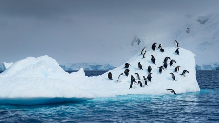Sea ice in Antarctica hits new record low