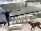 Panicking homeowner waves his arms as GIANT CRUISE liner steams TOWARDS his home (VIDEO)