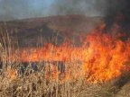 Tens of hectares of Moldovan land with vegetation ablaze