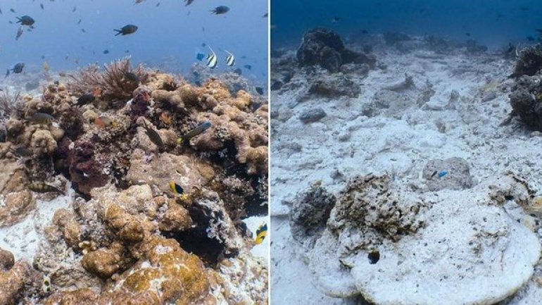 British-owned cruise ship wrecks one of Indonesia's best coral reefs