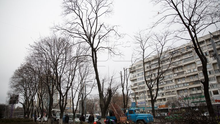 Logging continues in Chisinau (PHOTOREPORT)