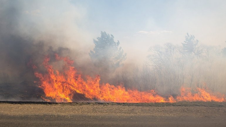 Firefighters in ALERT! Tens of hectares of vegetation burned across the country