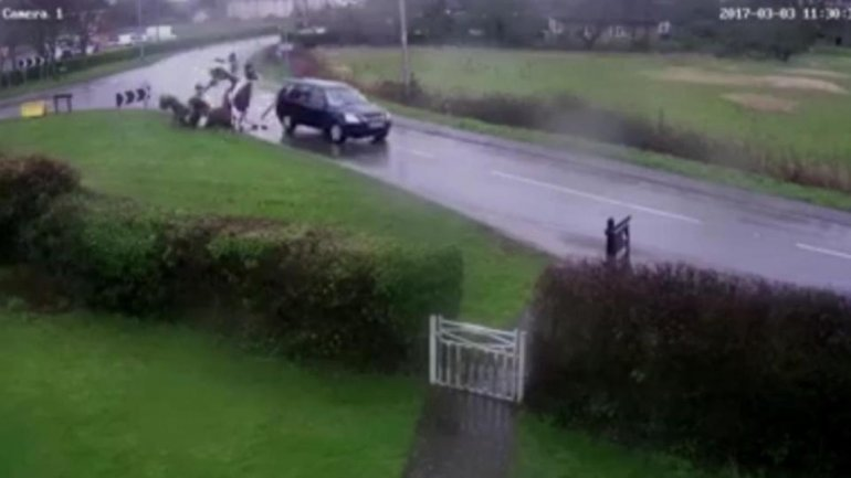 HORSE CRASH HORROR. Heartstopping moment a car ploughs into horses (VIDEO)