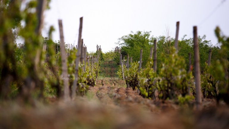 Government APPROVES new rules for registration of vineyards