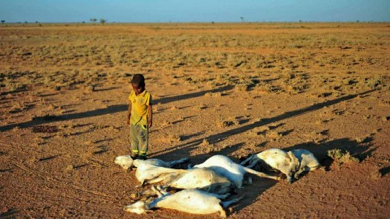 Somalia drought: At least 110 die as fears of famine grow