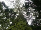 World is home to 60,000 tree species