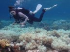 Great Barrier Reef: Two-thirds damaged in unprecedented bleaching