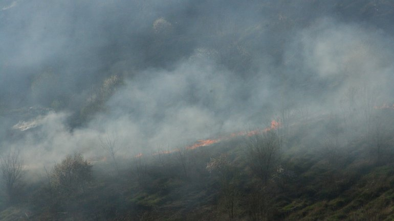 Details about outbreak of vegetation fire in Ciocana sector