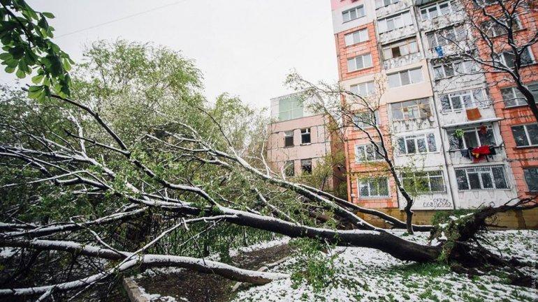 April snow causes HAVOC in Moldova (PHOTO/VIDEO)