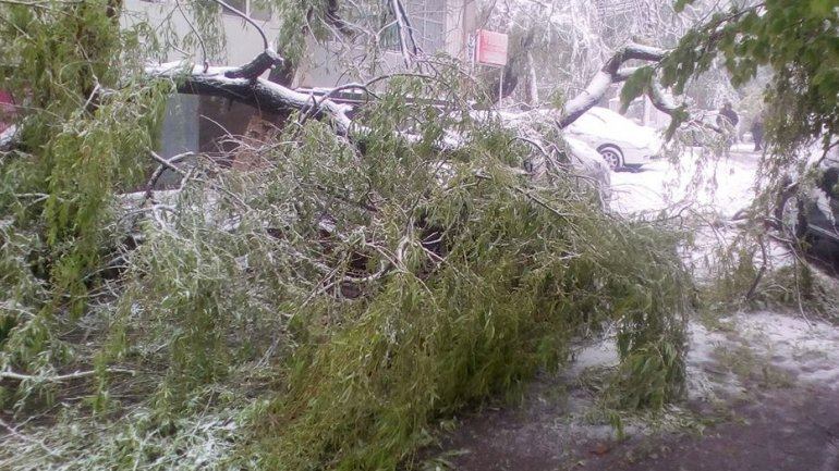 GREAT TRAGEDY. Employee of Capital school DIES after tree falls on him