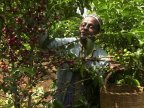 Global warming brews big trouble in coffee birthplace Ethiopia
