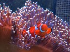 Great Barrier Reef worth A$56bn, report finds