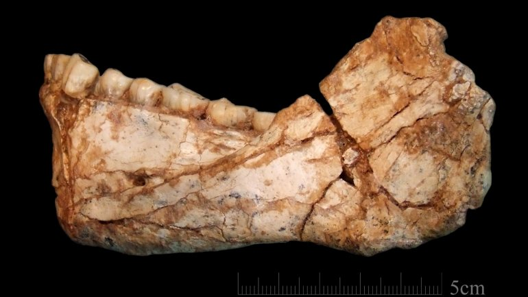 Oldest fossils of Homo Sapiens found in Morocco change history of our species