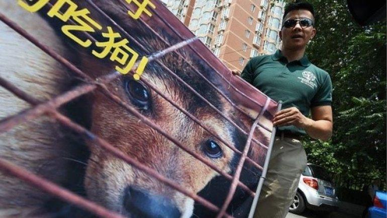 Yulin dog meat festival begins despite rumours of ban