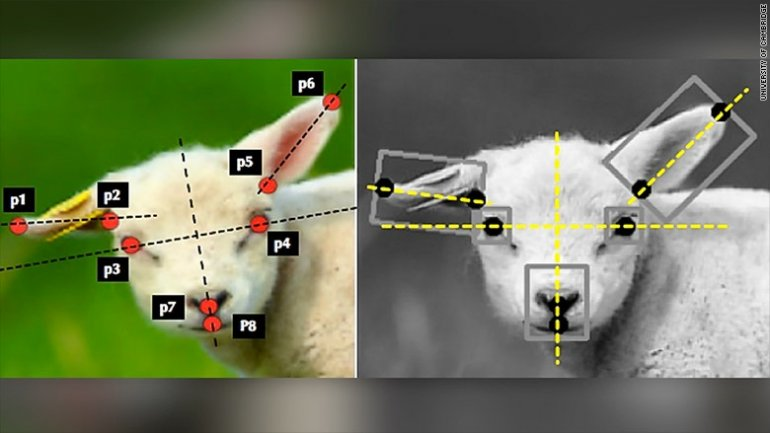 Artificial Intelligence may detect whether sheep are ill
