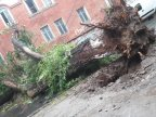Fallen branches finally evacuated from Capital