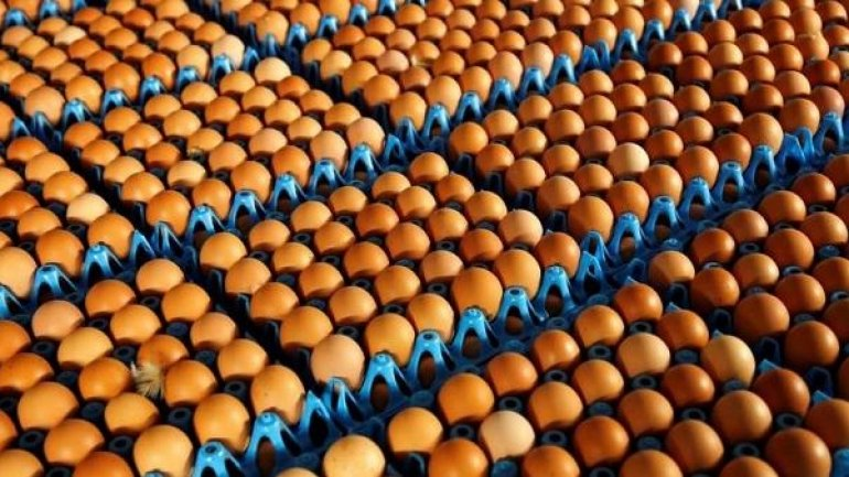 Contaminated eggs found in 40 countries