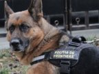 Latvia offers Moldova Border Police Dogs in warfare